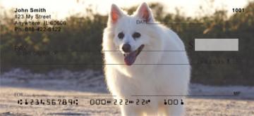 American Eskimo Dog Checks