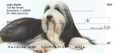 bearded collie dog breed checks