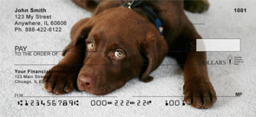 chocolate lab puppies (image 2)