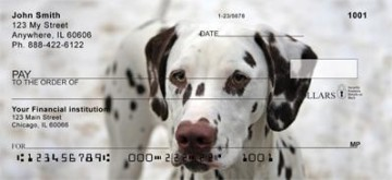 Dalmatian Checks