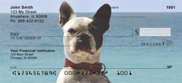 french bulldog checks 4