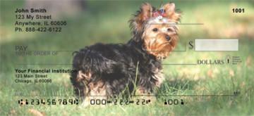 yorkshire Terriers1